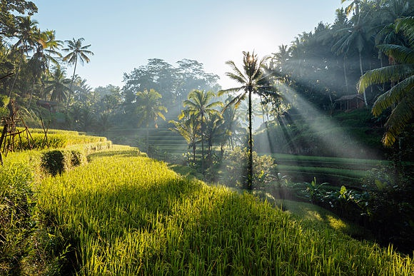 Bali Stock Photos