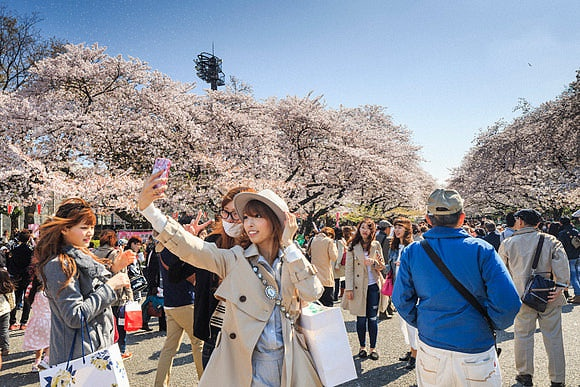Hanami - Cherry Blossom in Japan The Joy of Spring