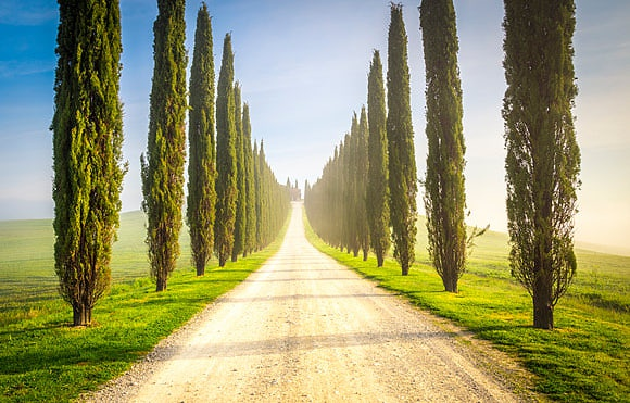 Cypress trees, icons of the Tuscan landscape