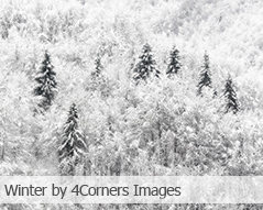 Winter by 4Corners Images