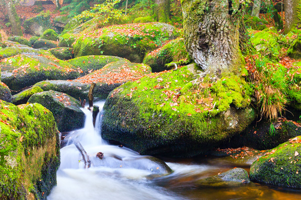 Dartmoor National Park images of Autumn in Devon by Suzy Bennett