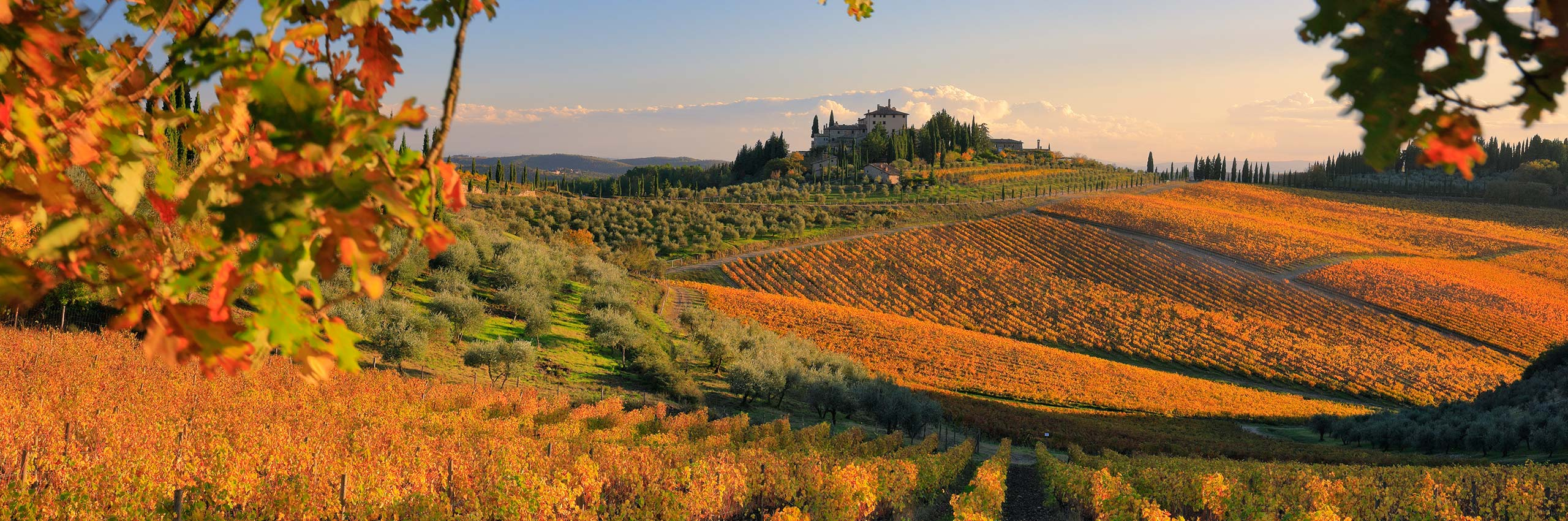 SIM-510352 | Italy/Tuscany, Siena district, Chianti, Gaiole in Chianti | © Riccardo Spila/4Corners