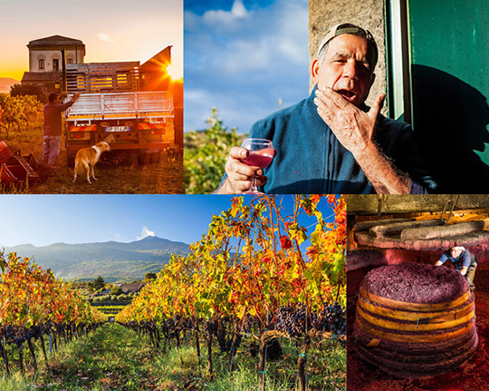 Volcanic Vineyards of Sicily TRAVEL REPORTAGE tending the vines and making wine on Mount Etna