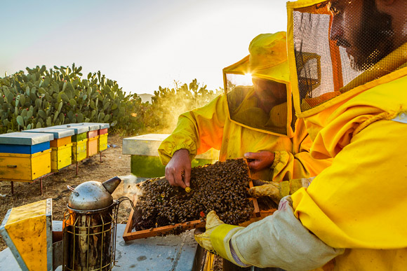 Etna's Honey TRAVEL REPORTAGE by Alessandro Saffo